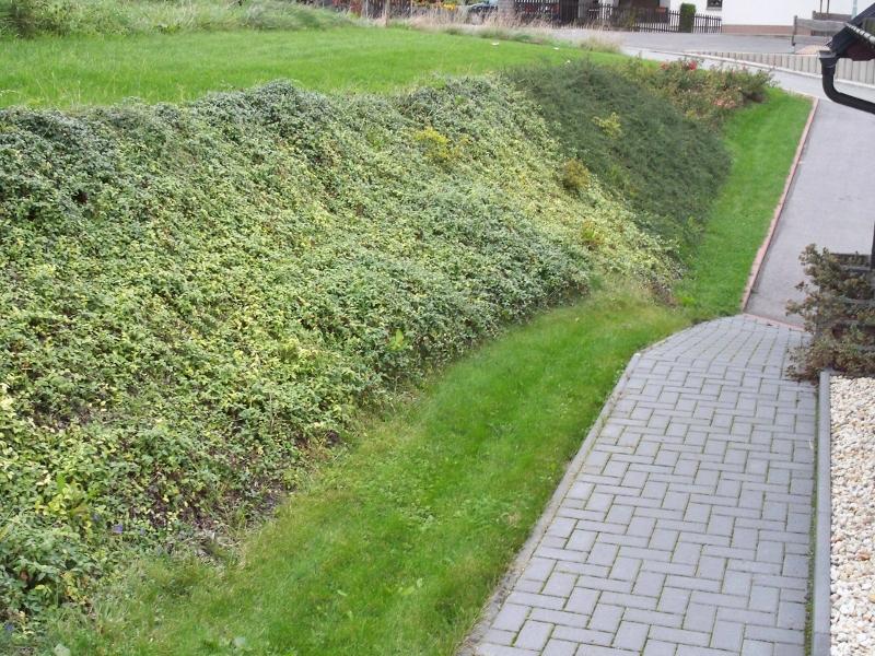 Hangbepflanzung mit Bodendecker